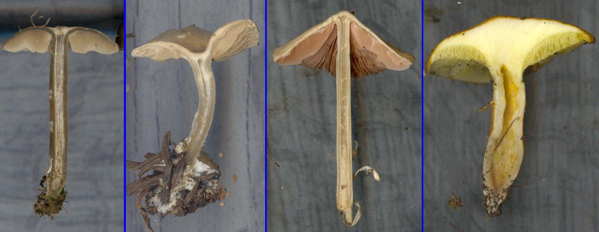 mushroom stipe context