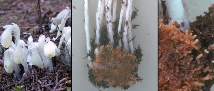 Fungi Natural History